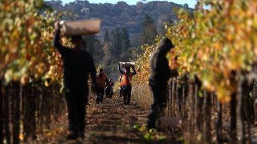 Les grands crus bordelais font un geste pour les viticulteurs californiens