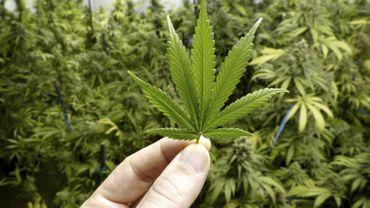 Les grands consommateurs de cannabis seraient plus exposés aux maladies osseuses