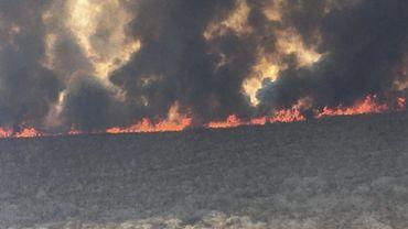 Incendies en Amazonie: 4 millions d'hectares dévastés en Bolivie, selon une ONG