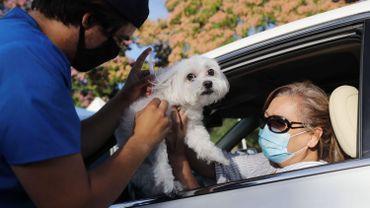 Faire vacciner son chien ou son chat, pas une obligation mais une recommandation.