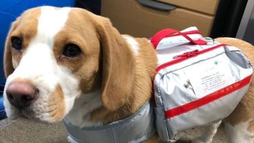 Catastrophes naturelles : les chiens ont eux aussi droit à leur sac de survie