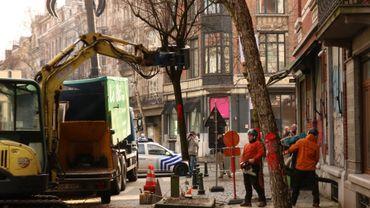 Forest : l'abattage des bouleaux de la rue Berkendael a débuté