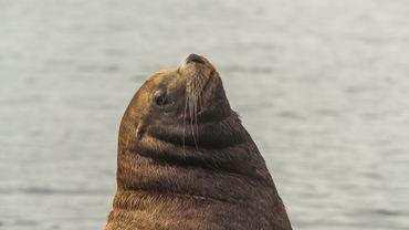 Russie: près de 300 phoques retrouvés morts au bord de la Caspienne