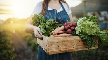 Quelles plateformes choisir pour manger local ?