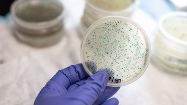"""Des """"grenades génétiques"""" pour cibler les bactéries résistantes aux antibiotiques"""