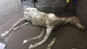 Des chevaux pétrifiés retrouvés par des archéologues à Pompéi