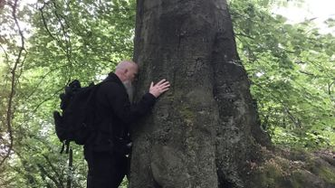 Liège: le bain de forêt, une pratique japonaise pour s'immerger dans la nature