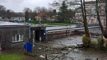 Les vents violents de la tempête Bella ont arraché un arbre à l'IRM