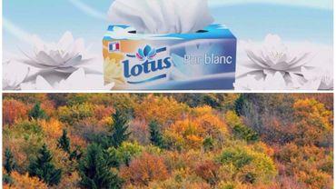 Pour fabriquer des mouchoirs en papier, on détruit la forêt boréale, dénonce Greenpeace