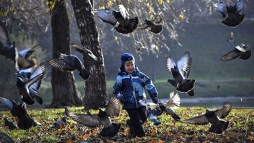 Illustration - L'Afsca vient de confirmer l'apparition d'une maladie contagieuse chez un éleveur de pigeons à Houffalize.