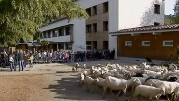 France: pour éviter une fermeture de classe, les parents inscrivent 15 moutons