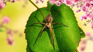 Parmi les phobies de l'été : la peur des araignées et des insectes