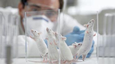 La Belgique est le 4e pays de l'UE a effectué les tests sur animaux les plus douloureux