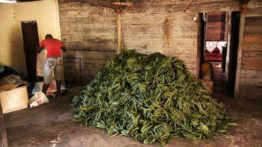 Plants de vanille dans la grange d'une ferme à Bemalamatra à 30 kilomètres de Sambava, le 25 mai 2016