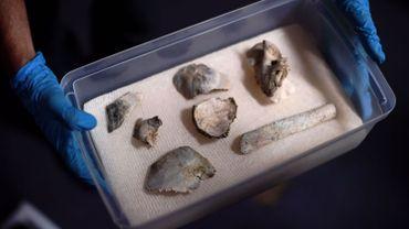 Des fragments du squelette de Luzia, vieux de 12 000 ans