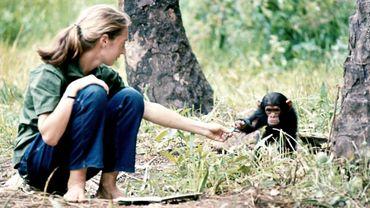 Sur les traces des chimpanzés avec Jane Goodall et Google Maps