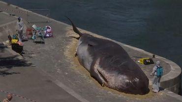 Le collectif avait déjà placé une fausse baleine échouée le long de la Seine à Paris.