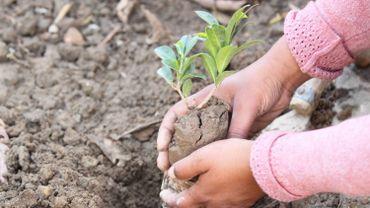 Climat : le Pakistan va planter 10milliards d'arbres et ferme ses centrales au charbon