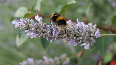 Implanter des ruches en ville, c'est bien. Encore faut-il penser à la nourriture disponible…