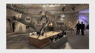 Le squelette d'un dinosaure exposé chez Sotheby's à Paris en septembre 2010