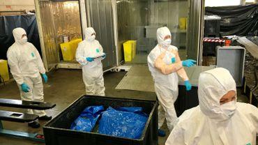Dans le centre de collecte de Virton arrivent toutes les carcasses de sangliers.