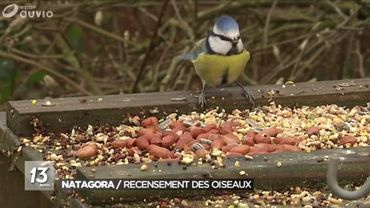 15ème weekend de recensement des oiseaux avec Natagora
