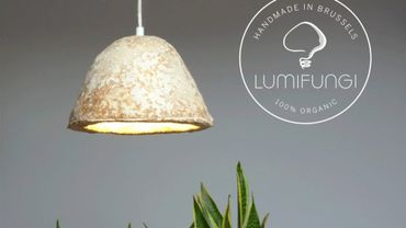 Créer des lampes avec des champignons, il fallait y penser!