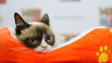Le futur employé de la clinique irlandaise parviendrait-il à faire ronronner le célèbre Grumpy Cat?