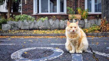 """L'asbl """"Les Amis des Animaux"""" lance une campagne de stérilisation des chats errants"""