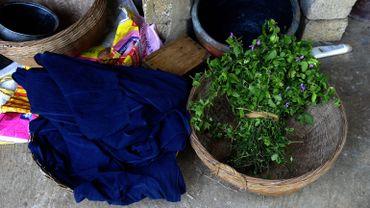 L'indigo est utilisé comme colorant sous sa forme naturelle depuis au moins 6.000 ans.