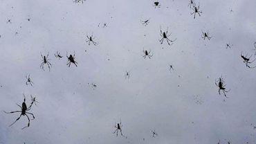 Le phénomène a de quoi pétrifier les arachnophobes.