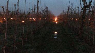 Les bougies en parafine dans des seaux en métal font remonter la température au pied des pommiers de un à deux degrés, assez pour que les fleurs ne gelent pas.