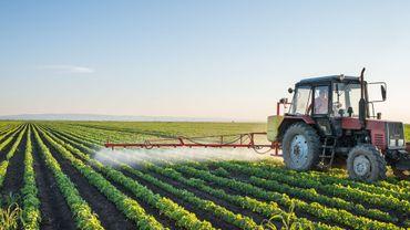 Les pesticides à l'origine d'un surpoids chez les souris mâles selon une étude