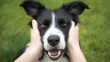 Une personne sur cinq préfèrerait avoir un chien qu'une relation amoureuse