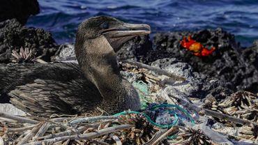 Pollution plastique : un outil de prévision pour aider les Galapagos