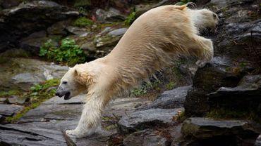 Ours découpé à la tronçonneuse en France: et chez nous, que font les parcs animaliers en cas de décès?