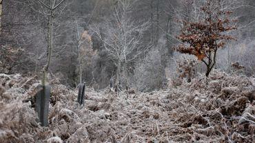 Météo de ce mercredi : le givre en Ardenne