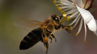 Alors qu'en 1989, de un à un kilo et demi d'insectes étaient ainsi attrapés dans les prés fleuris, seuls 300 grammes ont été capturés en 2013.
