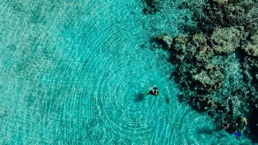 La grande barrière de corail, témoin du réchauffement des eaux, vient de vivre quatre épisodes de blanchissement en moins de 20 ans.