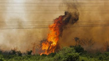 Cet été, plusieurs incendies ont ravagé le poumon du monde.