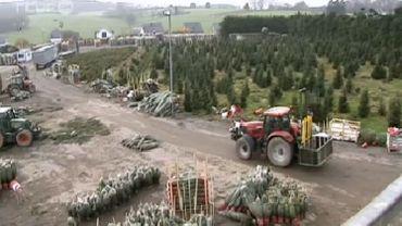 Les sapins de Noël belges vendus en Russie