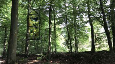 A la découverte de la Forêt de Soignes, poumon vert qui borde la région bruxelloise