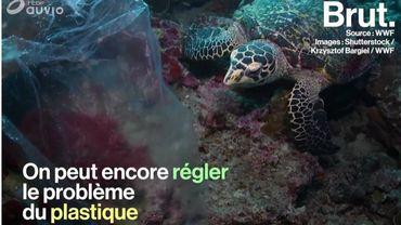 L'ONG WWF a une solution qui pourrait nous sortir de la crise du plastique