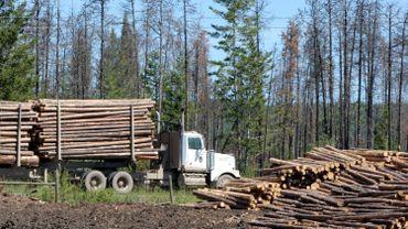 Le bois et le papier coûtent plus cher: comment l'expliquer?