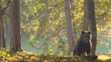 Un 4ème ourson au Domaine des Grottes de Han !