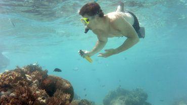 Un touriste plongeant près de la barrière de corail en Australie, le 22 septembre 2014