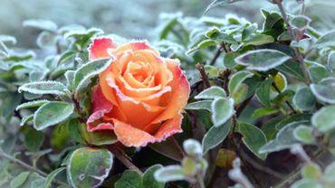 Les plantes qui fleurissent trop tôt peuvent être menacées par des gelées tardives