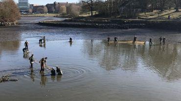 Louvain-la-Neuve: le sauvetage de milliers de poissons avant la mise en assec du lac