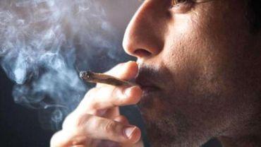 Une variété forte de cannabis augmente le risque de maladie mentale