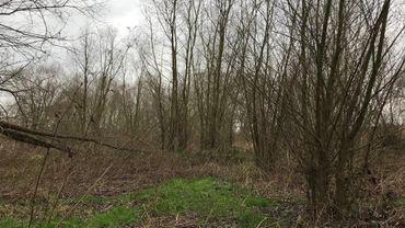 Il y aura  bientôt plus de plantes à fleurs, et donc plus d'insectes et d'oiseaux sur cette friche située sur le territoire communal d'Anderlecht à deux pas du Ring.